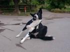 groenlaenderhund